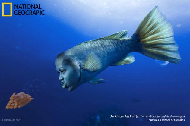 african ass fish