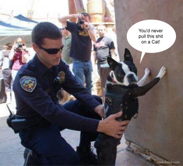 canine profiling