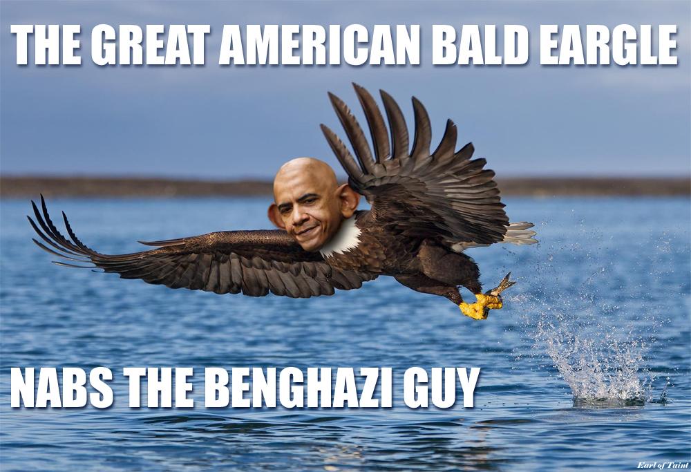 bald eargle
