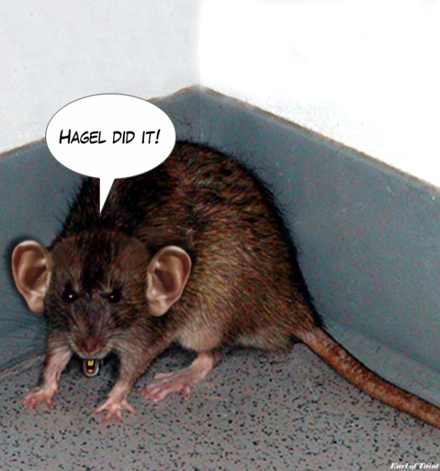 cornered rat