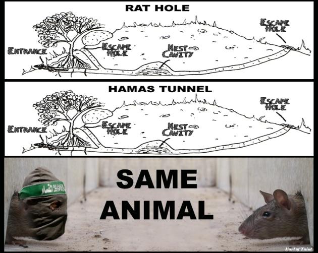 RAT HOLES
