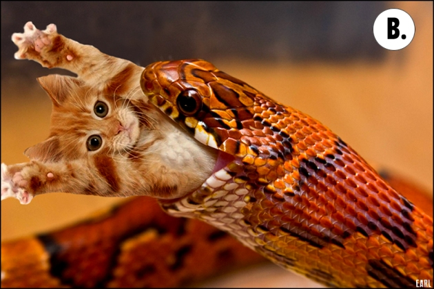 snake eating a kitten