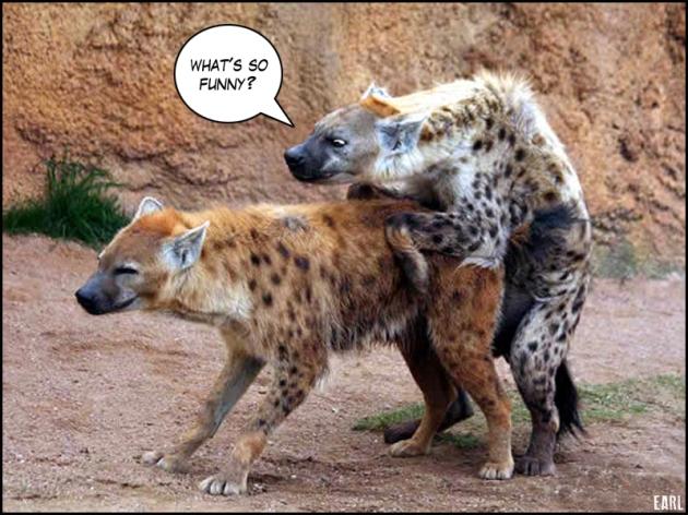 hyenas-hit-it