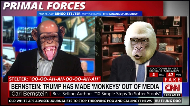 CNN monkeys