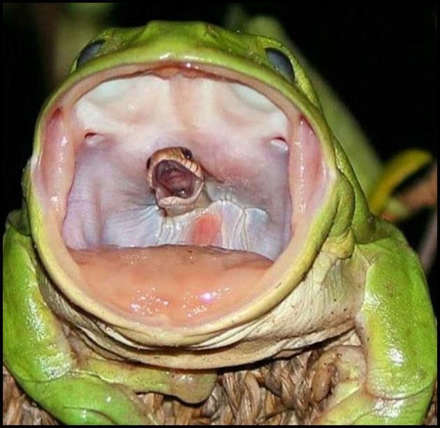 frogsnake